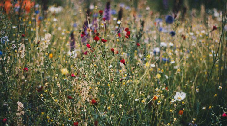 10 bonnes raisons de renoncer à vous battre : champ de fleurs