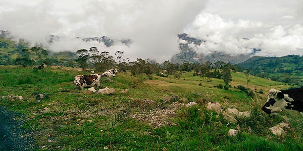 I wasn't kidding about the cows and clouds.