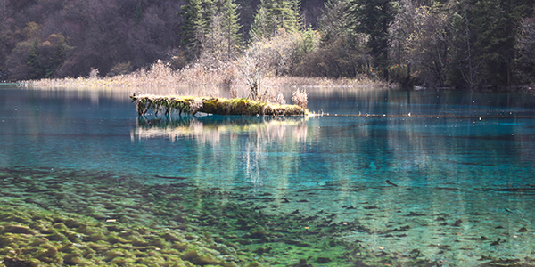 The water in Jiuzhaigou is so clear that you can all see that algae underneath. (That is algae.)