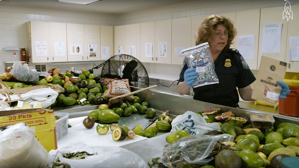 Find Out What Happens to Illegal Food After It's Confiscated via @maphappy