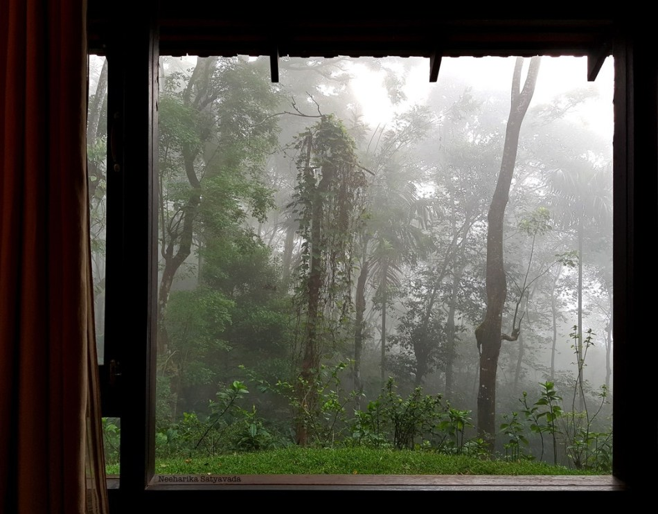 The mist laden woods of Wayanad, in the Western Ghats of Kerala, as seen from our hotel window.