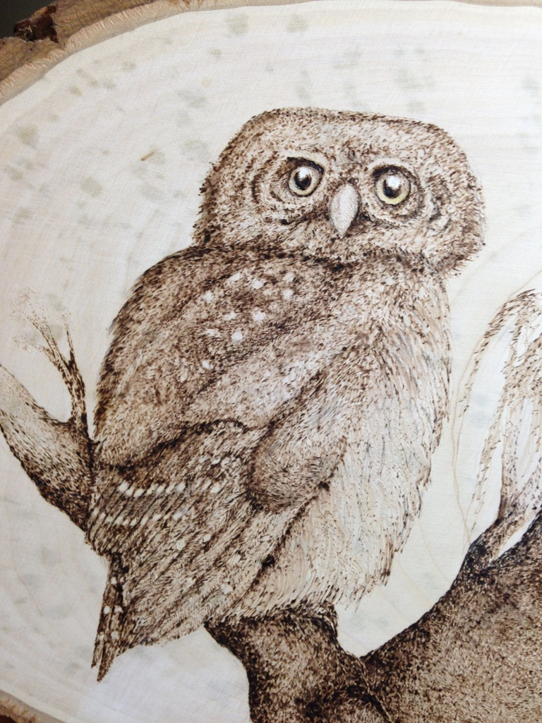 Ferruguineous Pygmy Owl