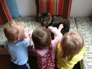 Callie, a very patient cat.