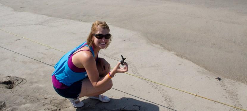 Releasing baby turtles