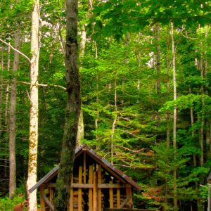 Wood shack in maple woods