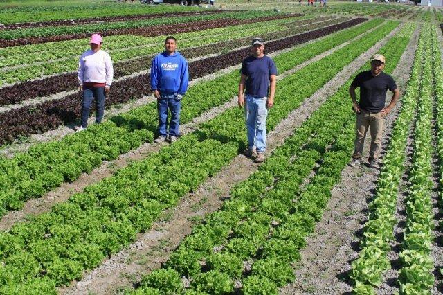 Skagit Valley Farmers