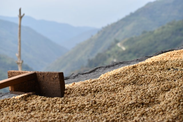 Coffee beans drying (with an amazing view!).