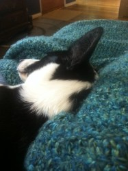Zora sleeping on a blanket next to me on the couch