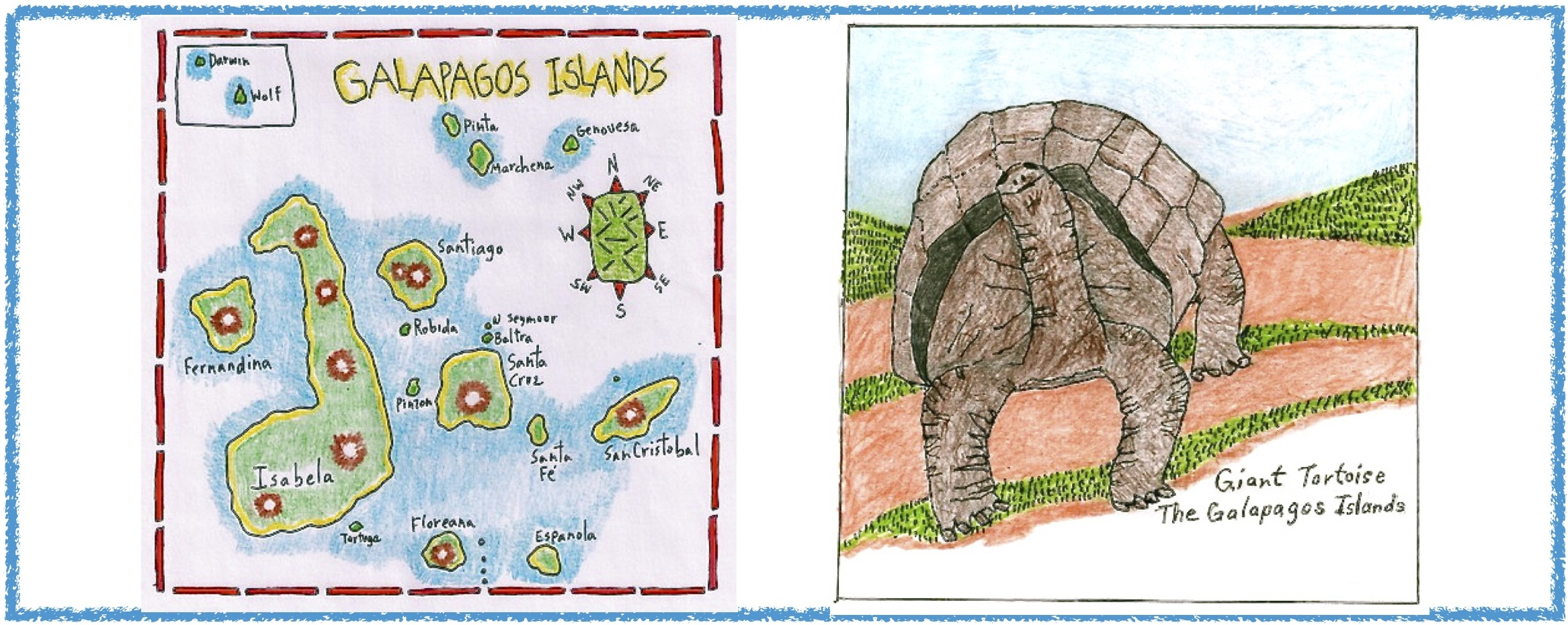 Galapagos New Species Of Giant Tortoise