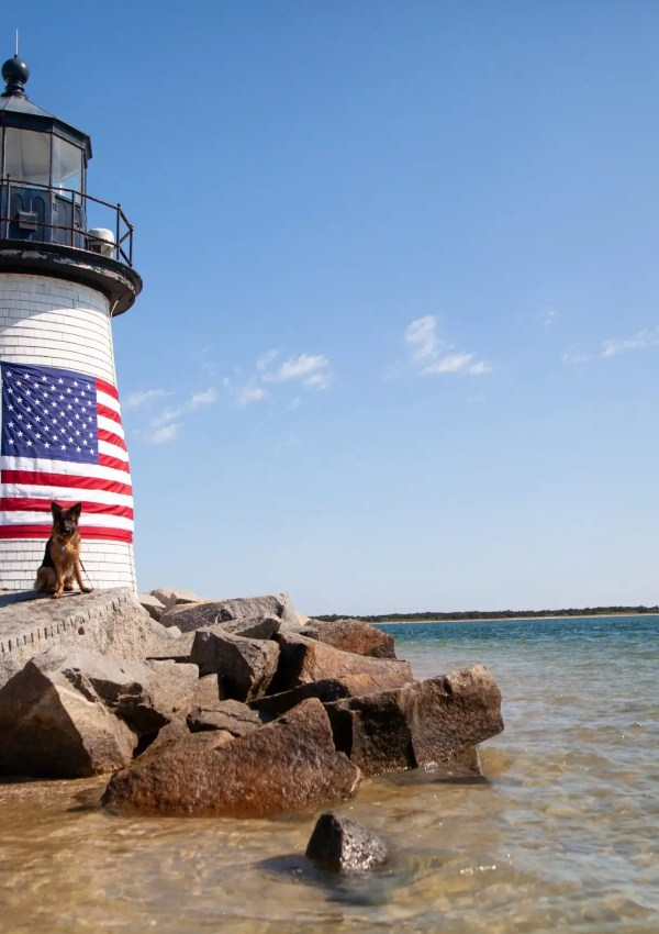 Dog-Friendly Guide to Nantucket, MA