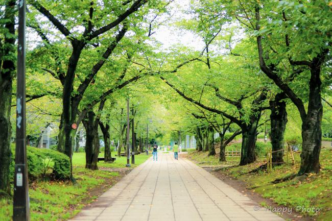 浮間公園 東京 オススメ公園