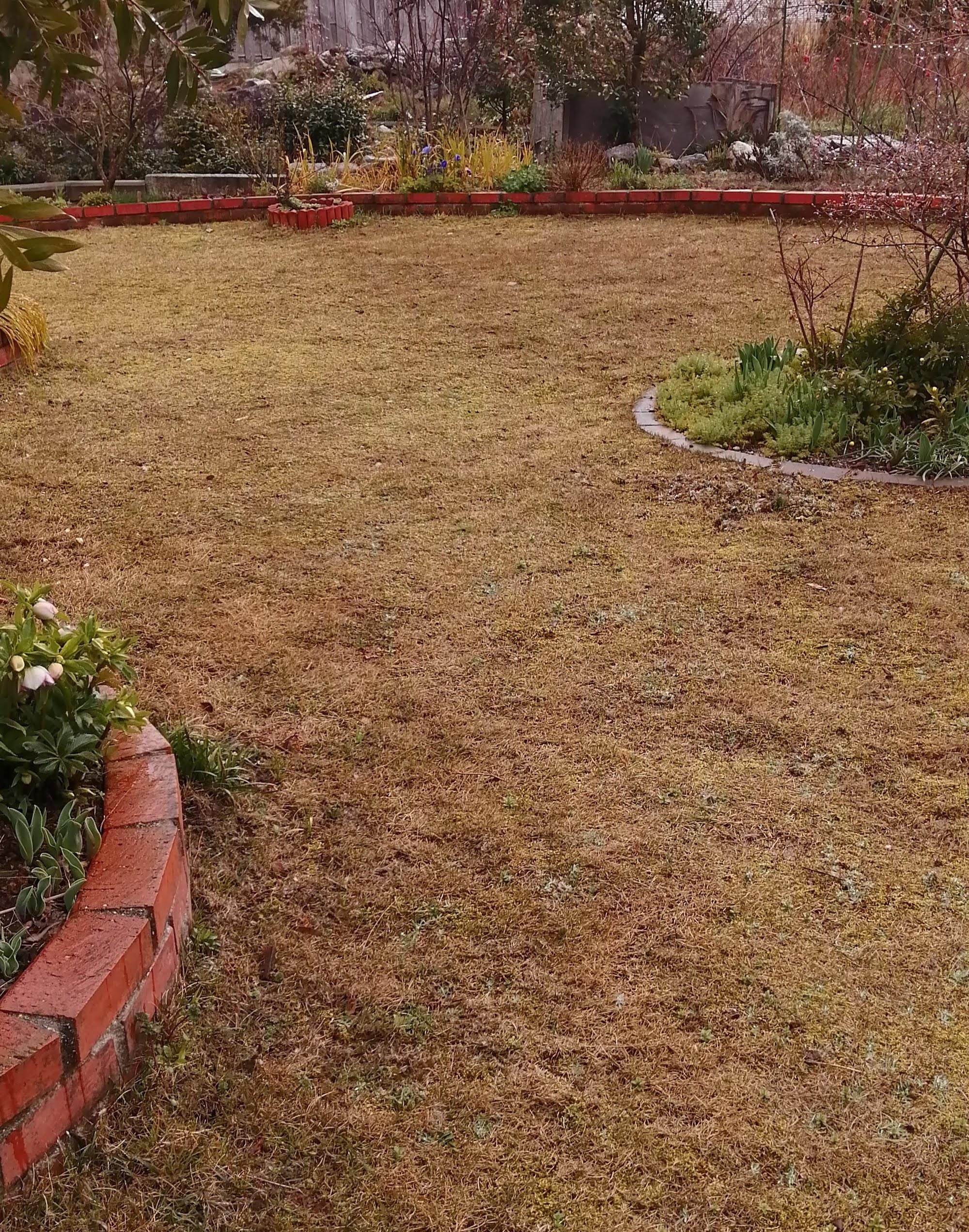 肥料 おすすめ 芝生