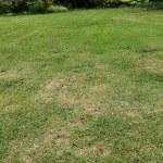 【芝生の殺菌剤】グラステン水和剤の効果的な使い方【サビ病・ラージパッチに】