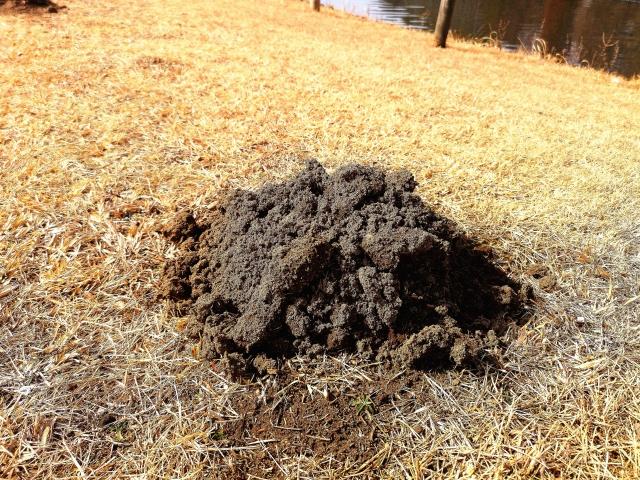 芝生のモグラ駆除