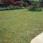 芝生の病気対策法!