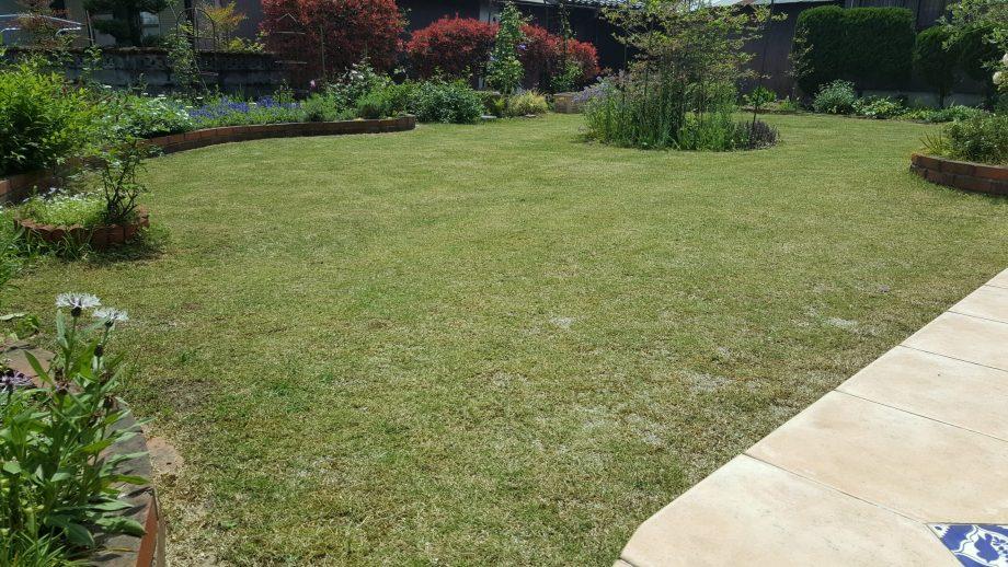 芝生の殺虫剤オルトランの効果について【害虫駆除は他にもあるぞ】