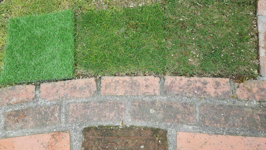 人工芝と天然芝を並べてみる