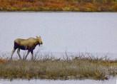 moose lake dempster highway