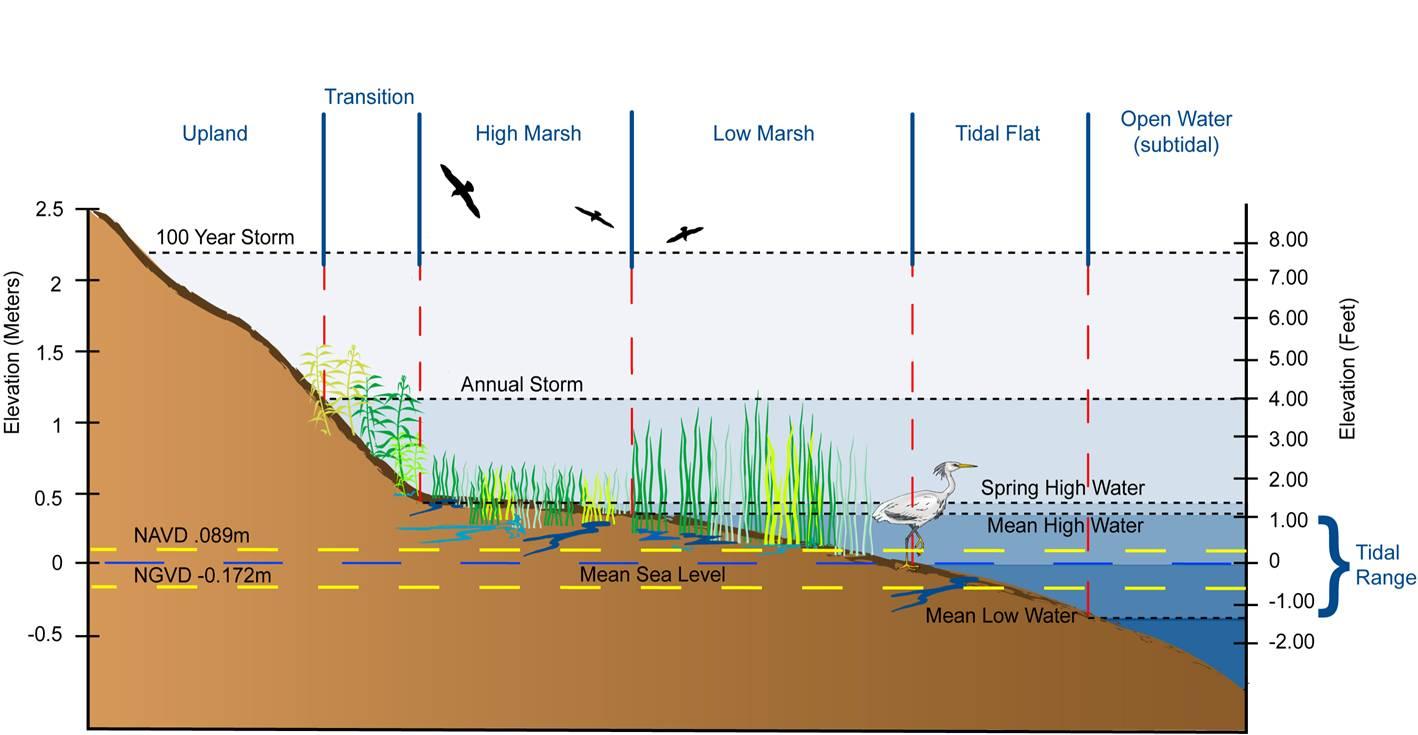 """Résultat de recherche d'images pour """"raised water levels chart"""""""