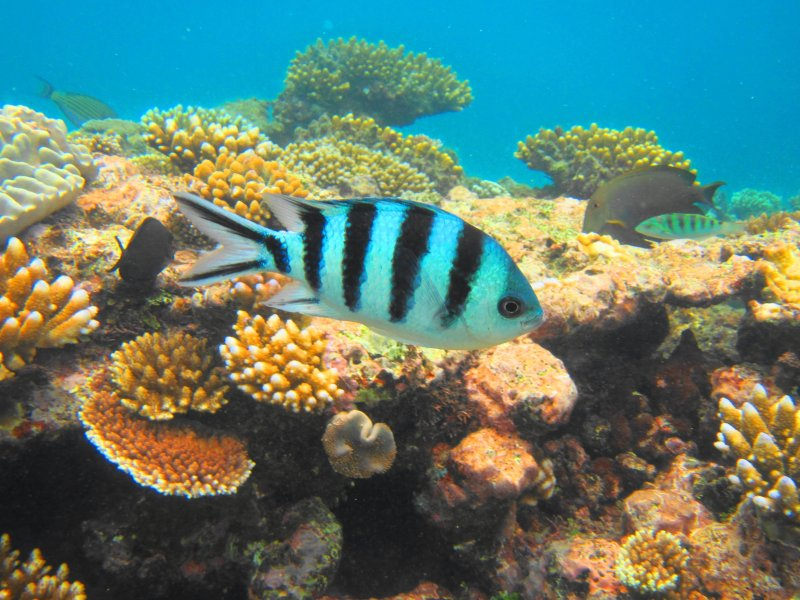 Snorkeling underwater photo Nassau, Bahamas