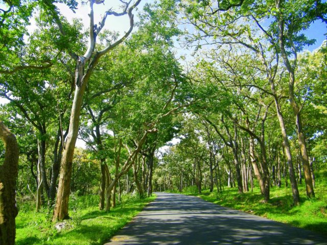 Best Road Trips in the World - India