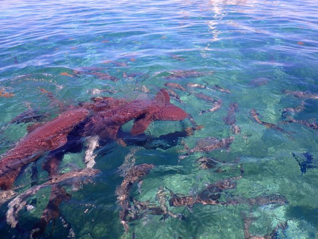 Snorkel- things to do in Caye Caulker