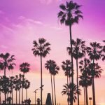 The First Timer's Weekend Guide to Venice Beach, California