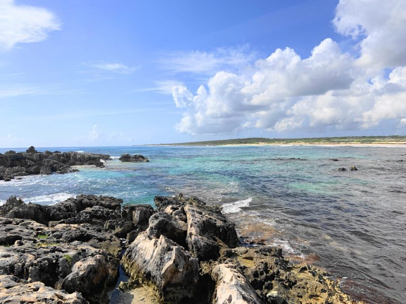 Plan the perfect 1 day in Cozumel, Mexico! These photos will show you why this paradise needs to be your next vacation!