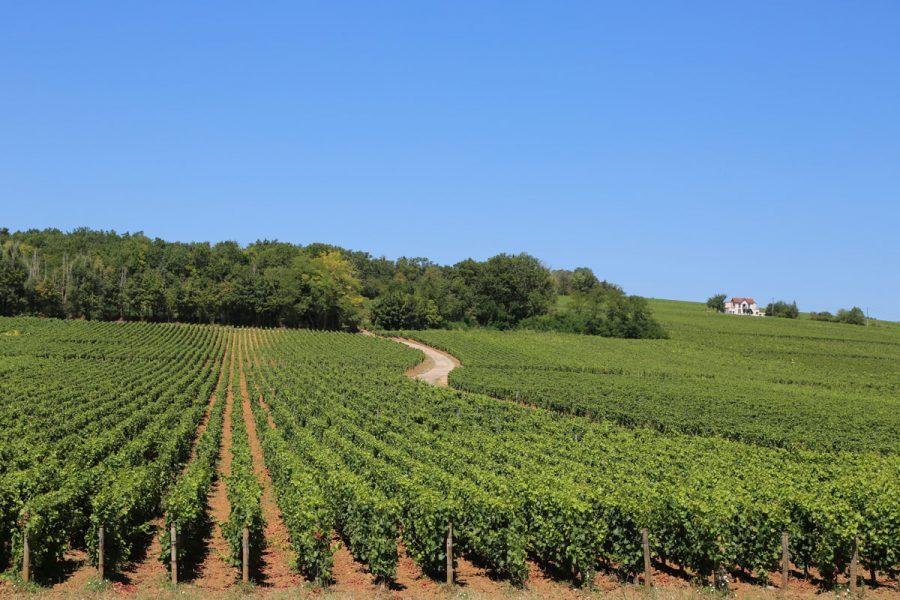Burgundy-Wine-Region-Elisa-best-road-trips-in-Europe