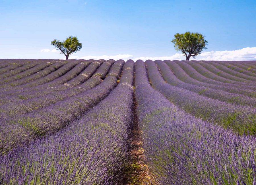Provence-France-Lavender-Field-best-road-trips-in-Europe