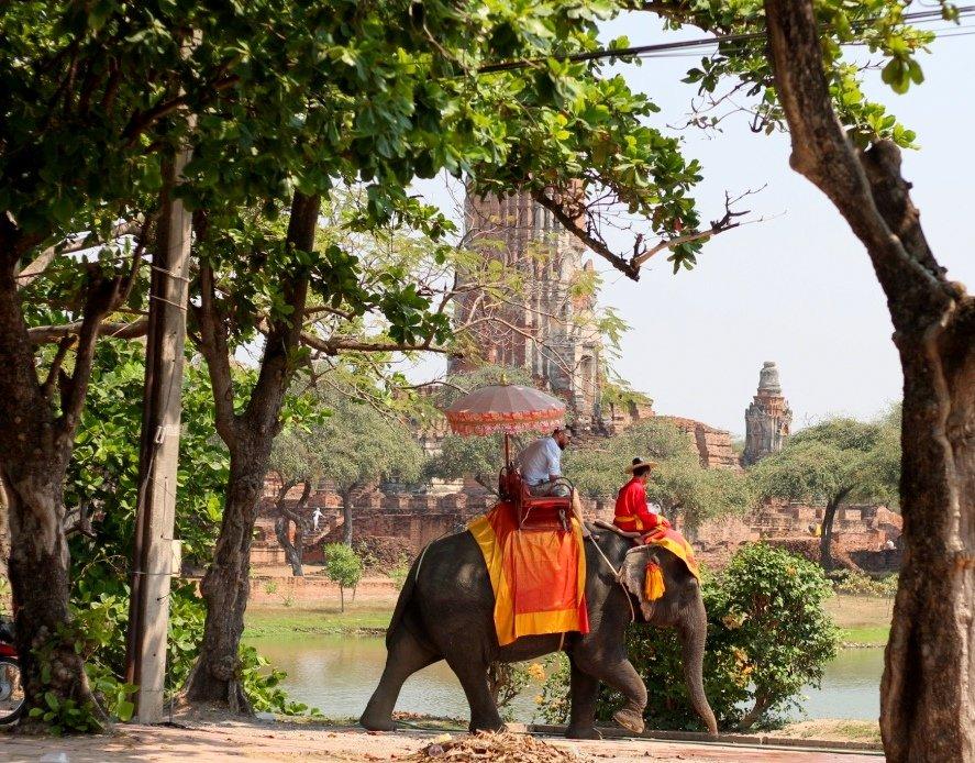 Elephant taxi in Ayutthaya