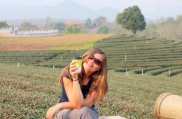 choui-fong-tea-plantation-chiang-rai-thailand