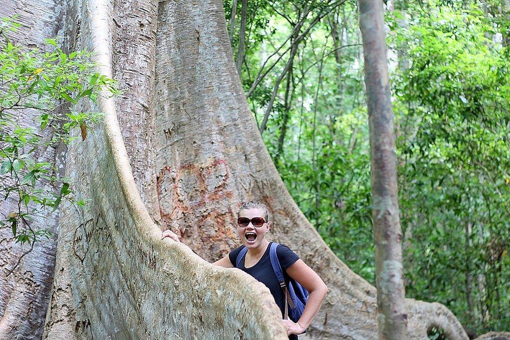 Cat Tien National Park - Tung Tree