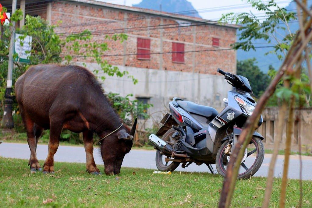 Vietnam guide, motorbike