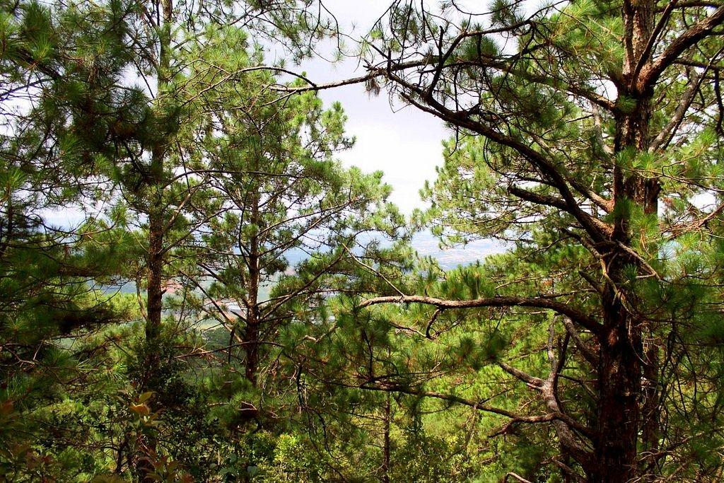 trekking-lang-biang-vietnam