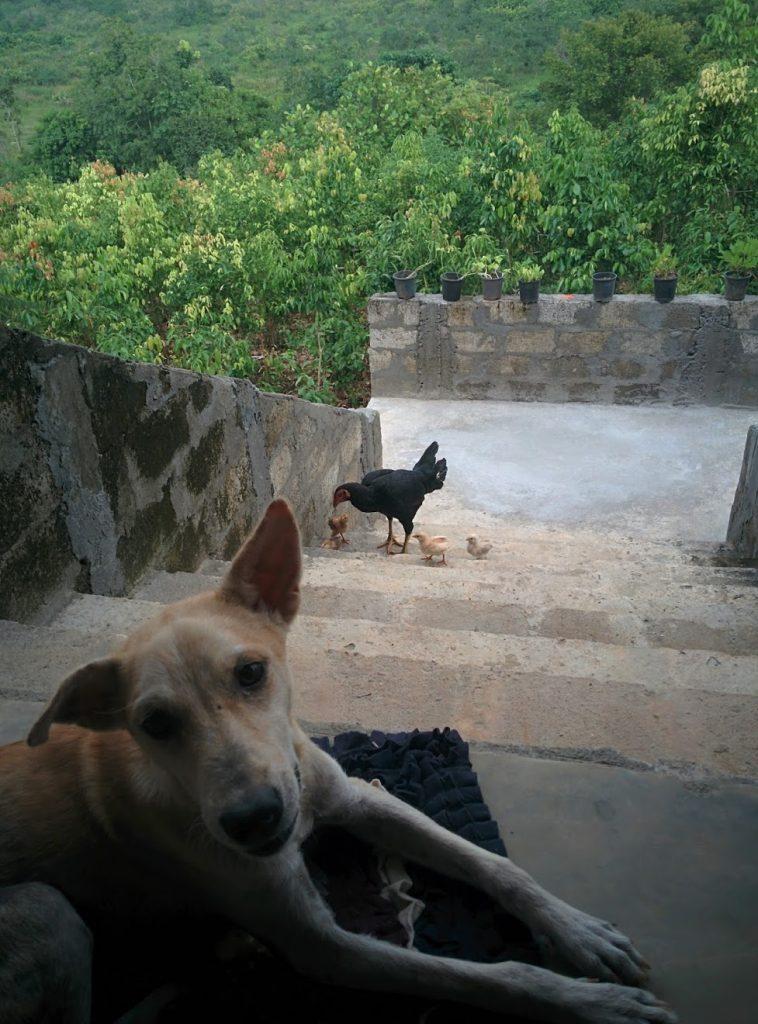 pumba the street dog