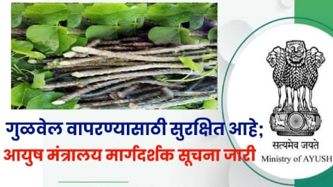 giloy is safe to use ministry of ayush