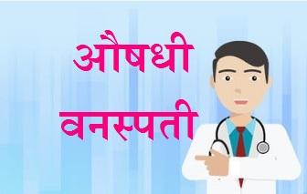aushadhee vansptee, औषधी वनस्पती, gharguti upay, aushadhi vanspti, marathidoctor, drvivek, drvivekanandmarathi health guide, घरगुती उपाय, marathi health, आरोग्यम् धनसंपदा, मराठी डॉक्टर, marathi doctor