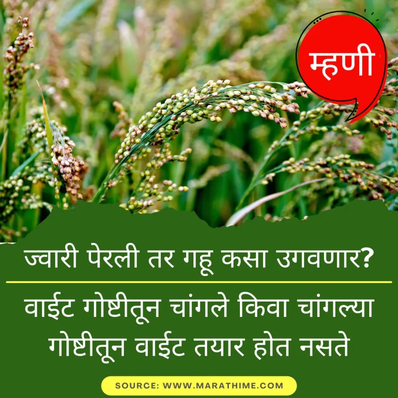ज्वारी पेरली तर गहू कसा उगवणार? - वाईट गोष्टीतून चांगले किवा चांगल्या गोष्टीतून वाईट तयार होत नसते - Marathi Mhani Images