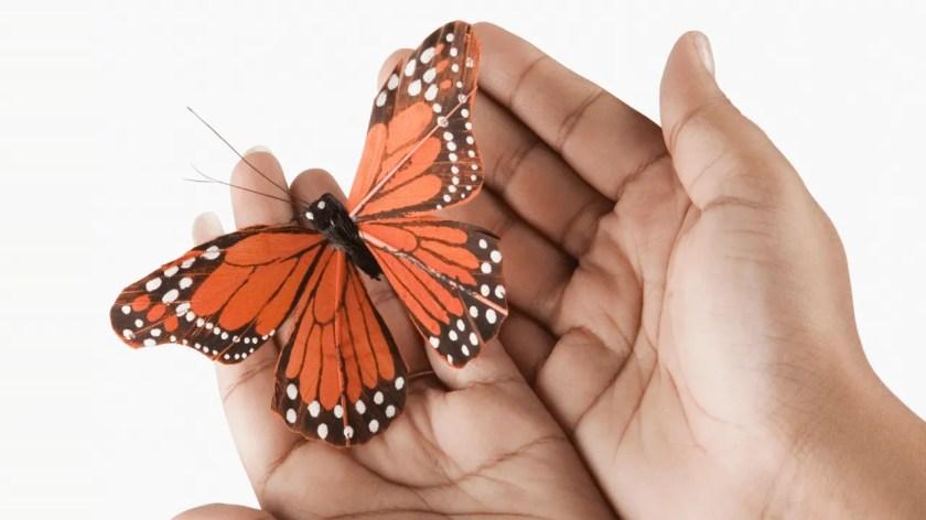 फुलपाखराचे आयुष्य