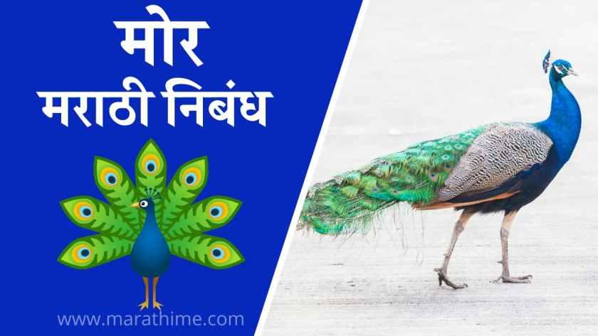 मोर निबंध मराठी, Essay on Peacock in Marathi