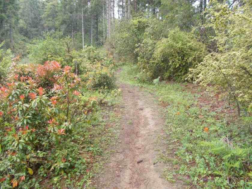 Global Limits Bhutan - The Last Secret - 200km Race Report 40