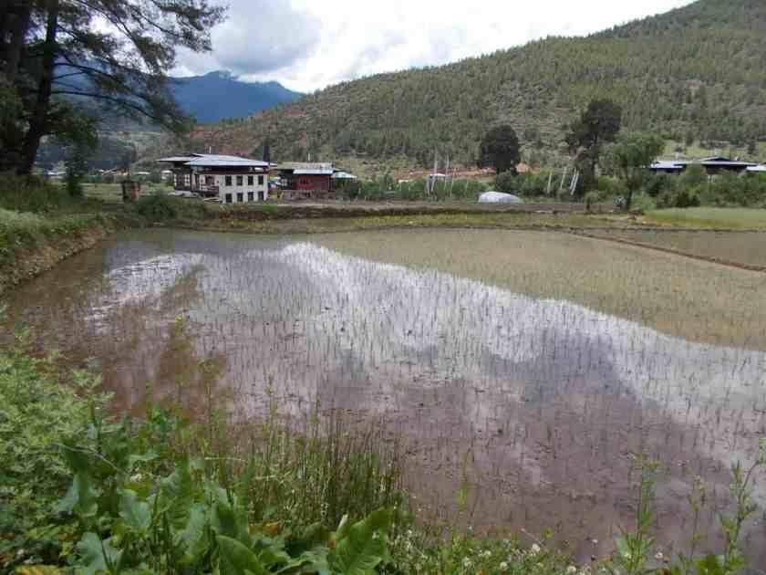 Global Limits Bhutan - The Last Secret - 200km Race Report 53