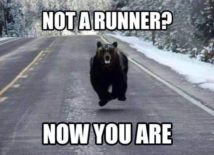 funny running meme bear chase