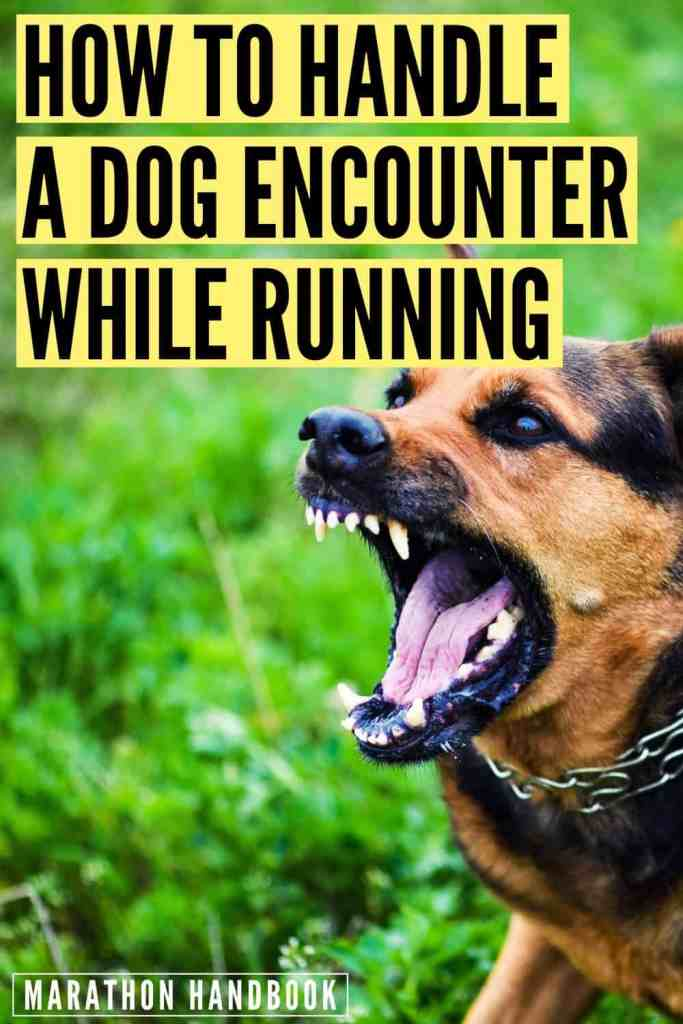 What to Do If a Dog Chases You While Running