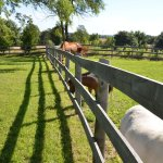 Marbill Hill Farm Paddocks Fence Line