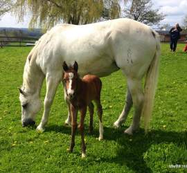 MarBill Hill Farm - Wembley Foal and Turtle - 2014