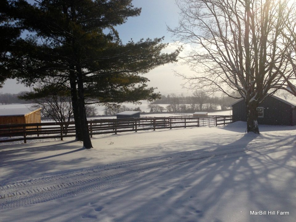 Winter Paddock