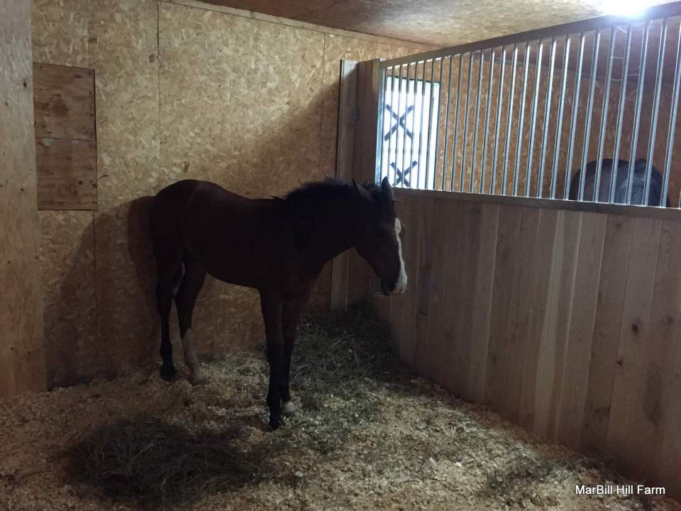 MarBill Hill Farm - Wembley - Foal - Stall