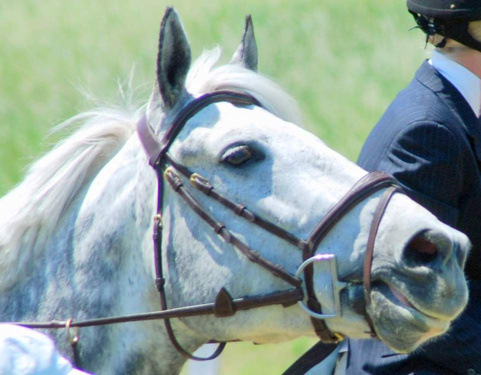 MarBill Hill Farm - Star - Profile
